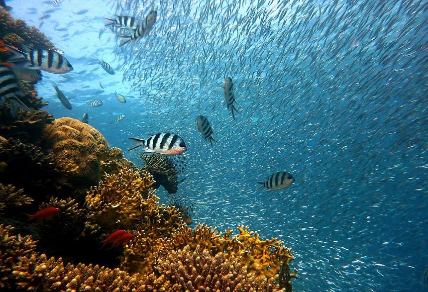 duiken op Tenerife