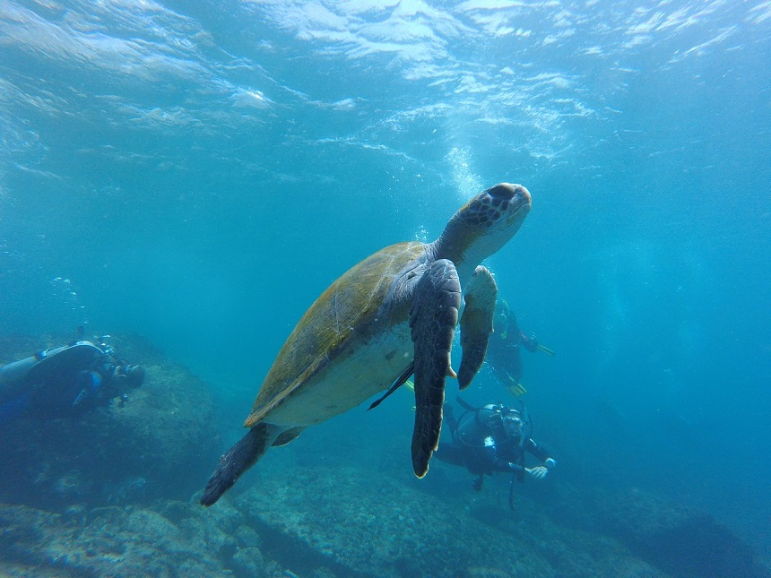 highlights van Egypte duiken zeeschildpad