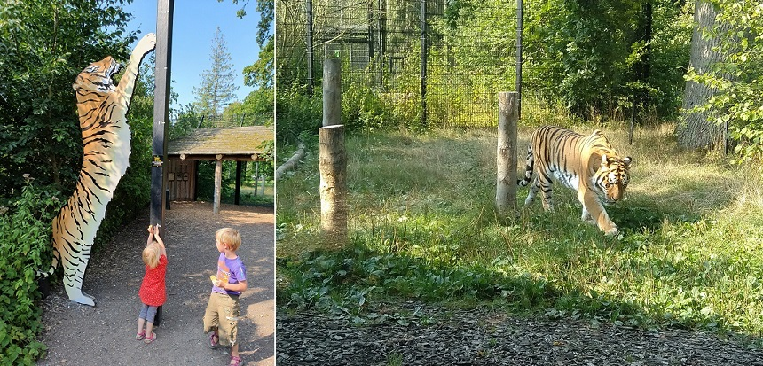 knuthenborg tijgersafari