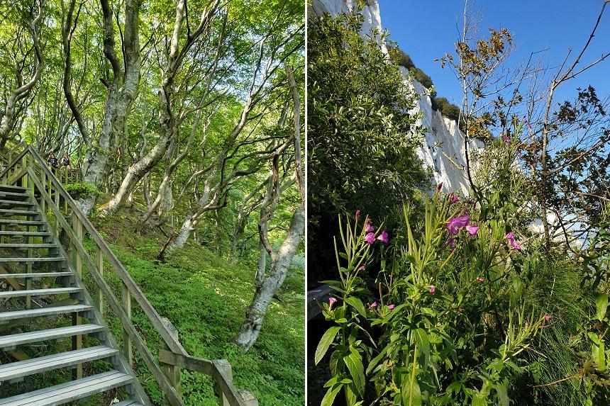 Kliffen, uitzichten en fossielen bij Møns Klint