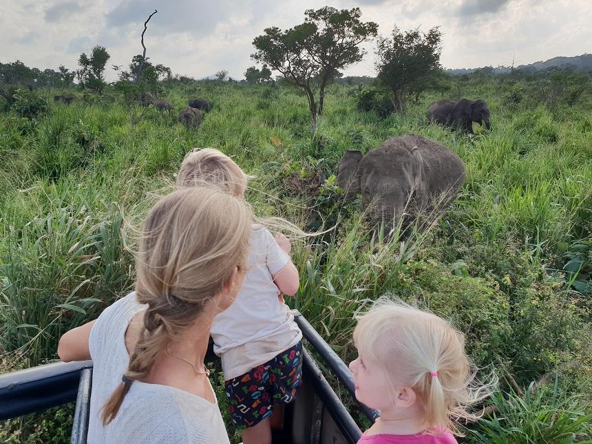 Op safari: olifanten spotten in Sri Lanka