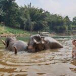 Olifanten wassen in Kanchanaburi