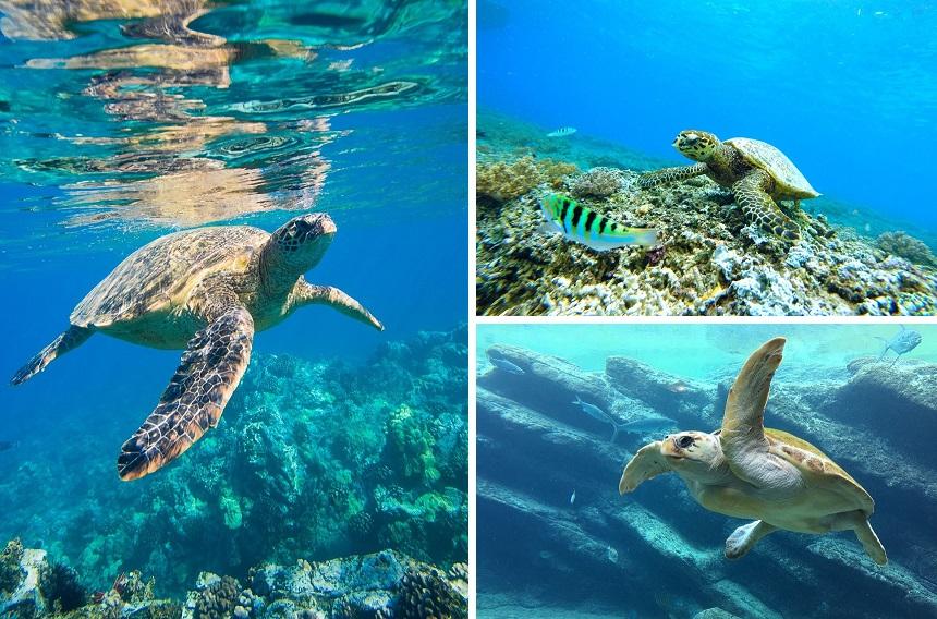 snorkelen op Tenerife