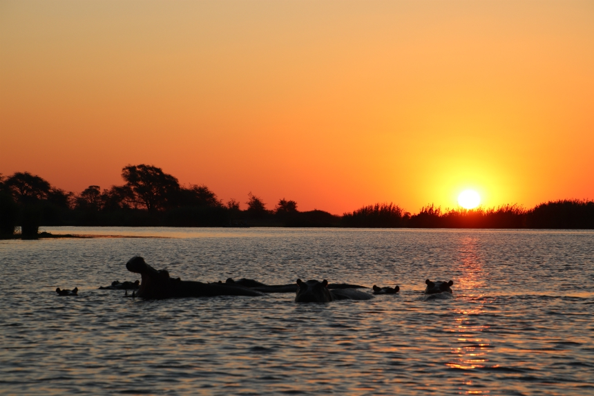 Nijlpaarden bij zonsondergang