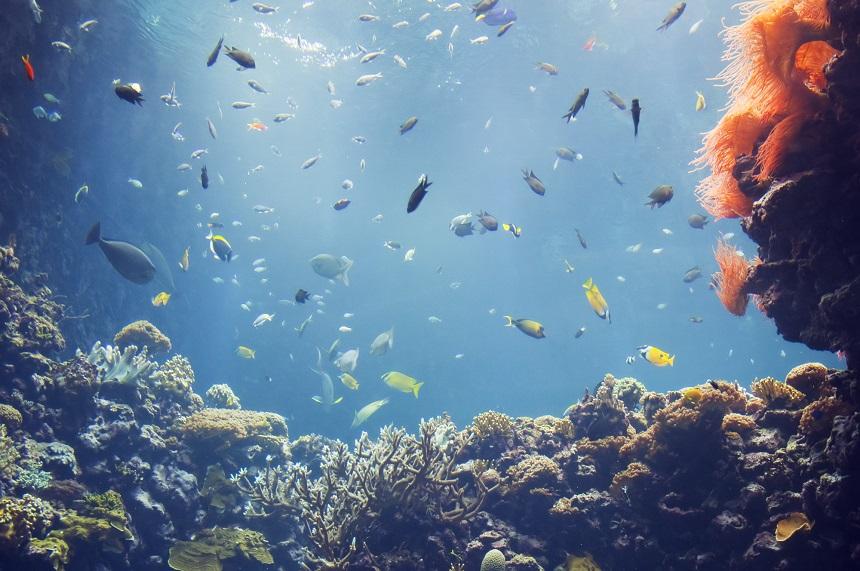 Burgers Zoo aquarium