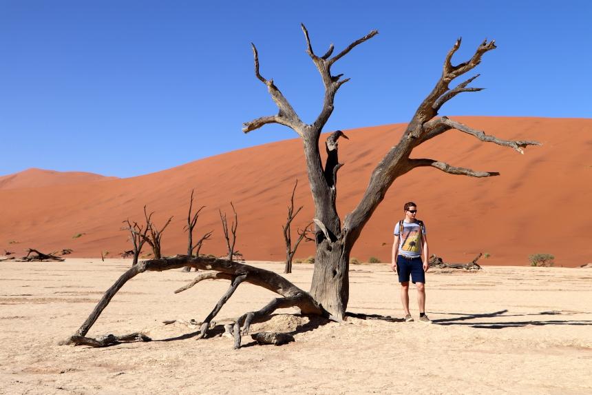 De bijzondere bomen van de Deadvlei