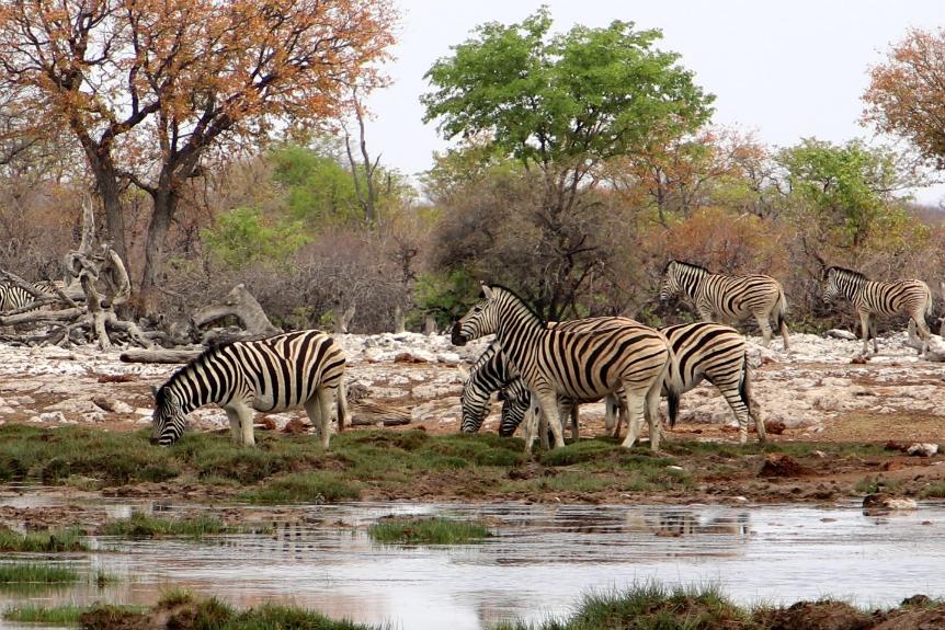 Rondreis Namibie: bezoek zeker Etosha Nationaal Park