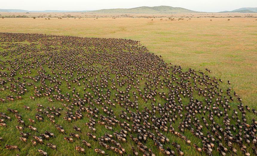 Indrukwekkende natuur Tanzania - jaarlijkse migratie van miljoenen gnoes door de Serengeti