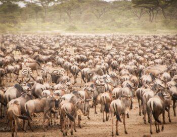 10 natuur records op naam van Tanzania
