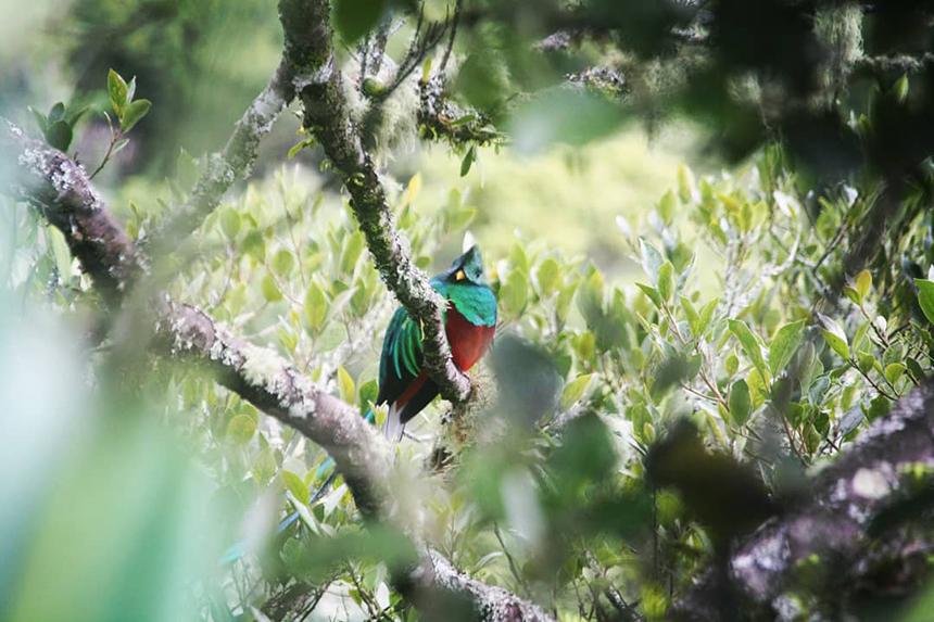 De quetzal, wat een kleurrijke vogel