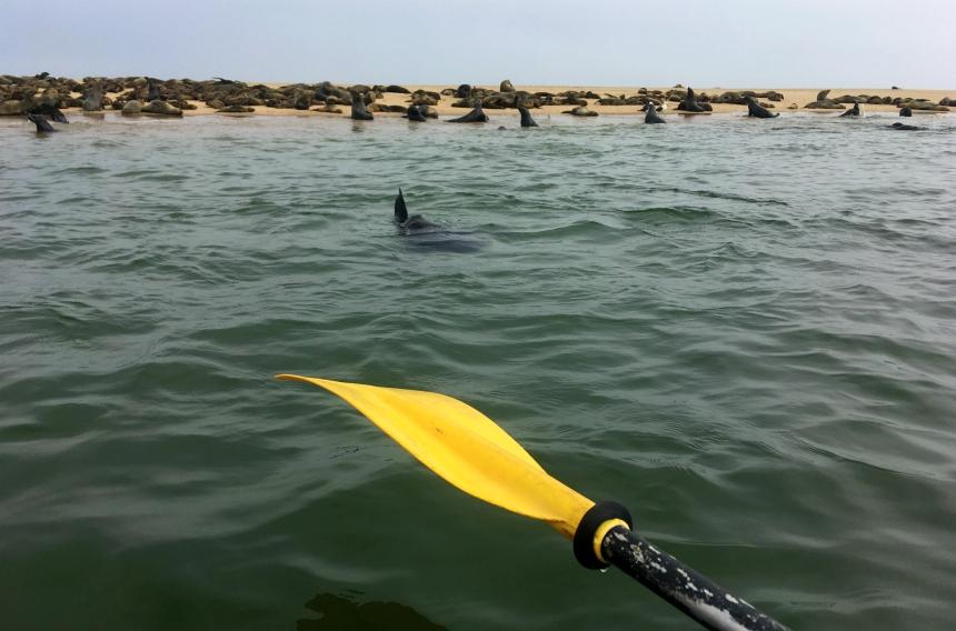 Highlight van een rondreis door Namibië: kajakken tussen zeehonden bij Walvisbaai