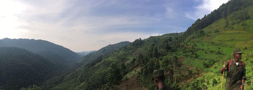 Het leefgebied van de berggorilla's in Oeganda