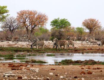 Geluksmomenten op reis in Namibië en Botswana