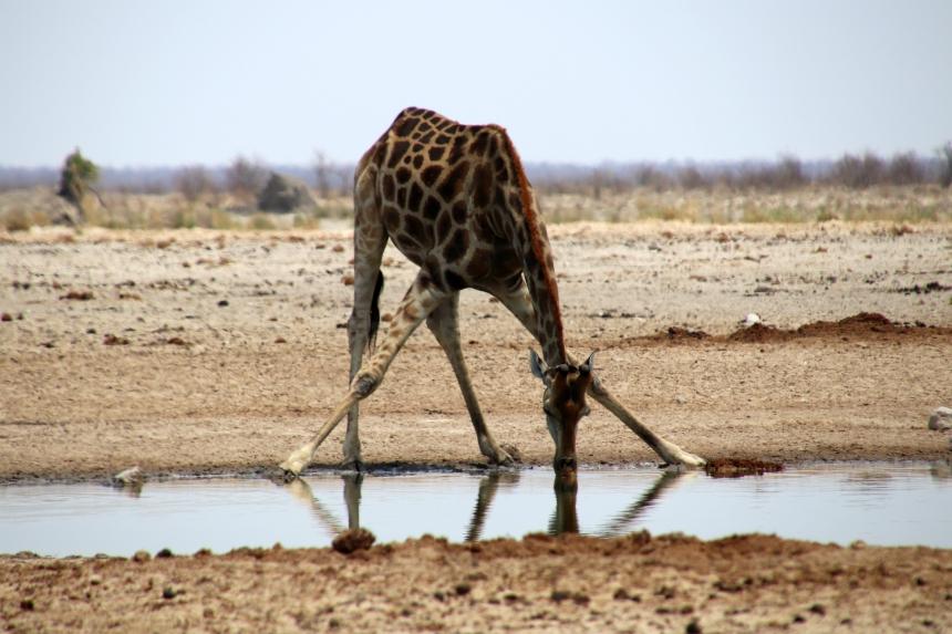 Dit is waarom je een rondreis Namibie en Botswana maakt: de prachtige safari's!