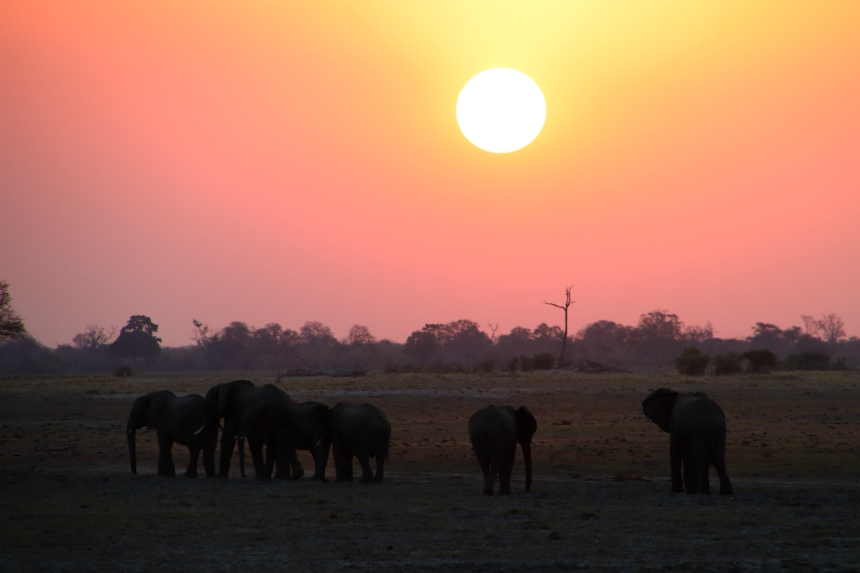 Olifanten bij zonsondergang in Bwabwata Nationaal Park
