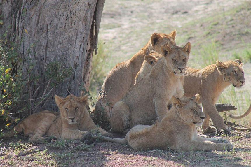 Tanzania heeft de meeste wilde dieren per vierkante meter