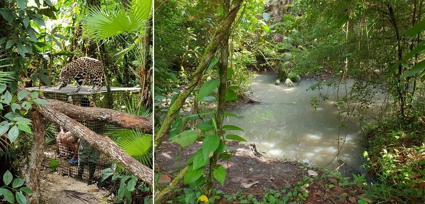 Belize Zoo jaguar en krokodil