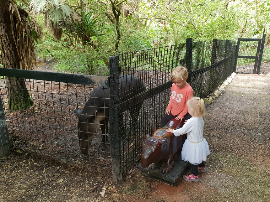 Tapir Town in The Belize Zoo