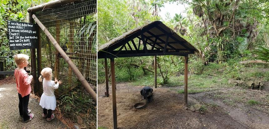 De Belize Zoo