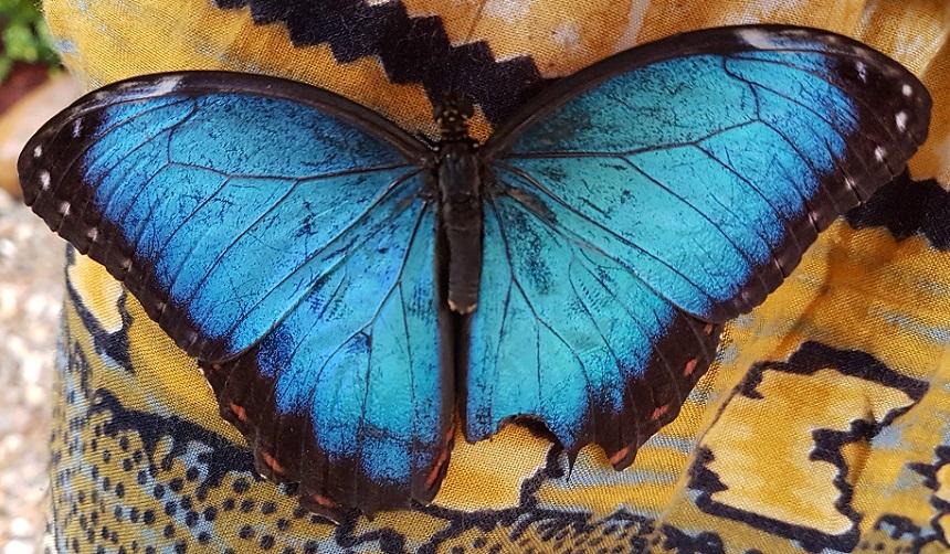 De Blue Morpho Butterfly Farm