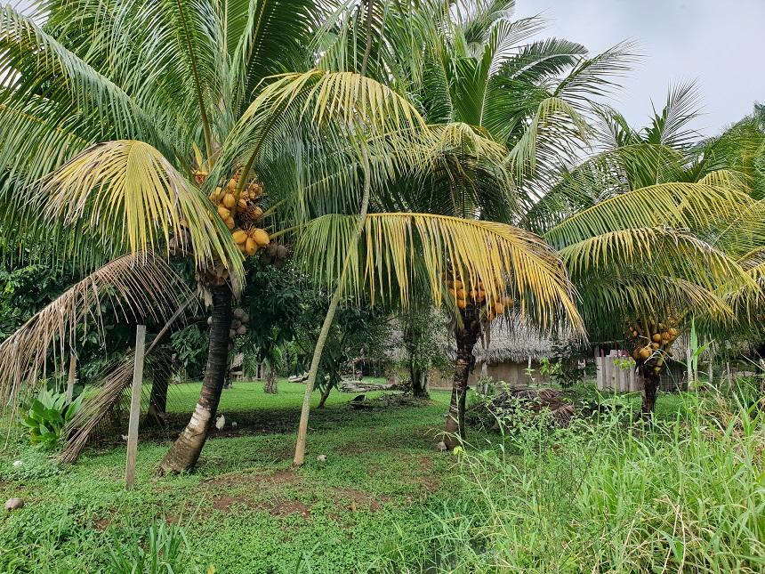 Een dorpje in het zuiden van Belize