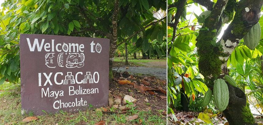 Leer chocolade maken bij Ixcacao