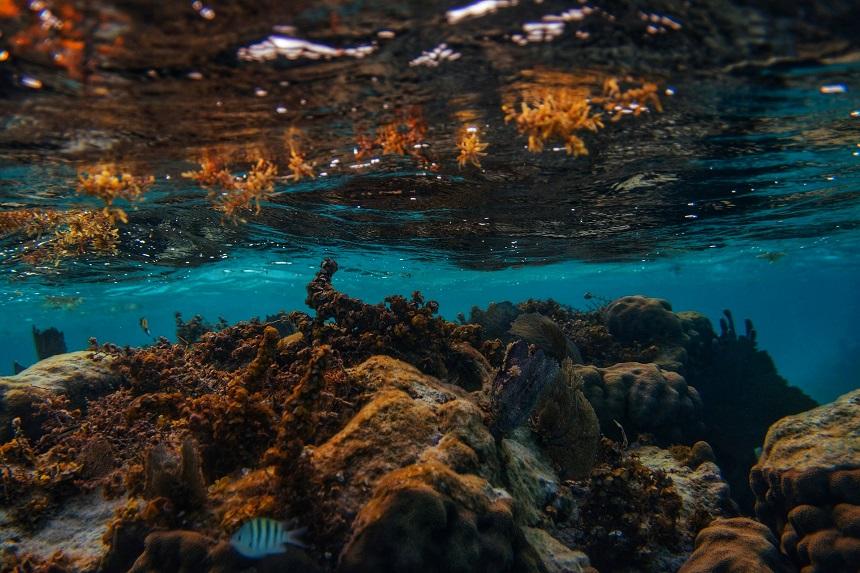 koraalrif belize