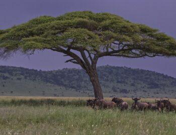 Serengeti: Afrika's beste safaripark 2019
