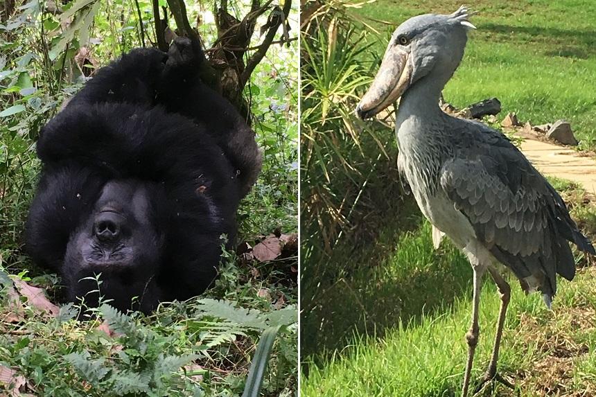 wildlife oeganda
