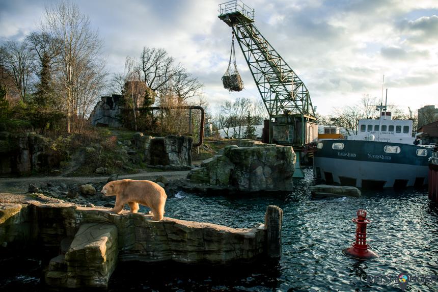 De ijsbeer verblijft in de nagebootste Canadese Yukon