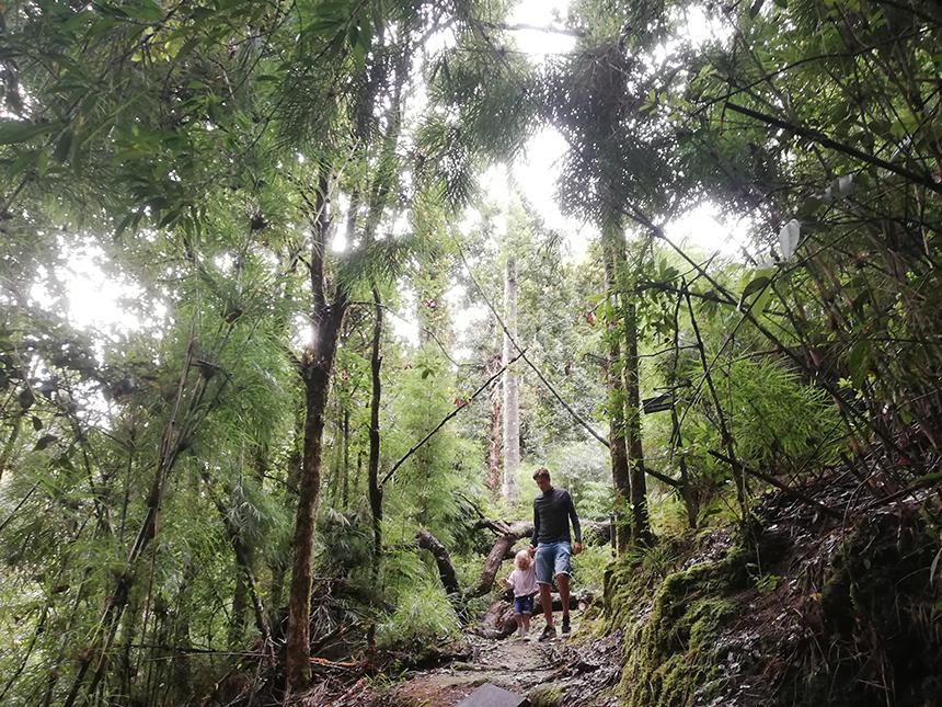 hiking trails, san gerardo de dota, los quetzales national park