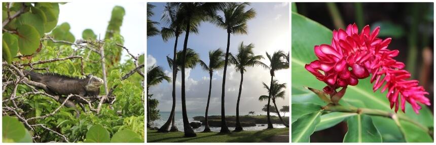 Guadeloupe heeft mooie natuur