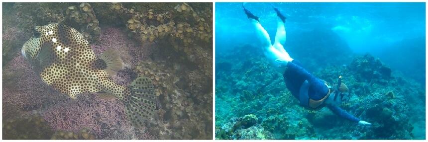 Snorkelen op Guadeloupe, een ideale vakantie activiteit