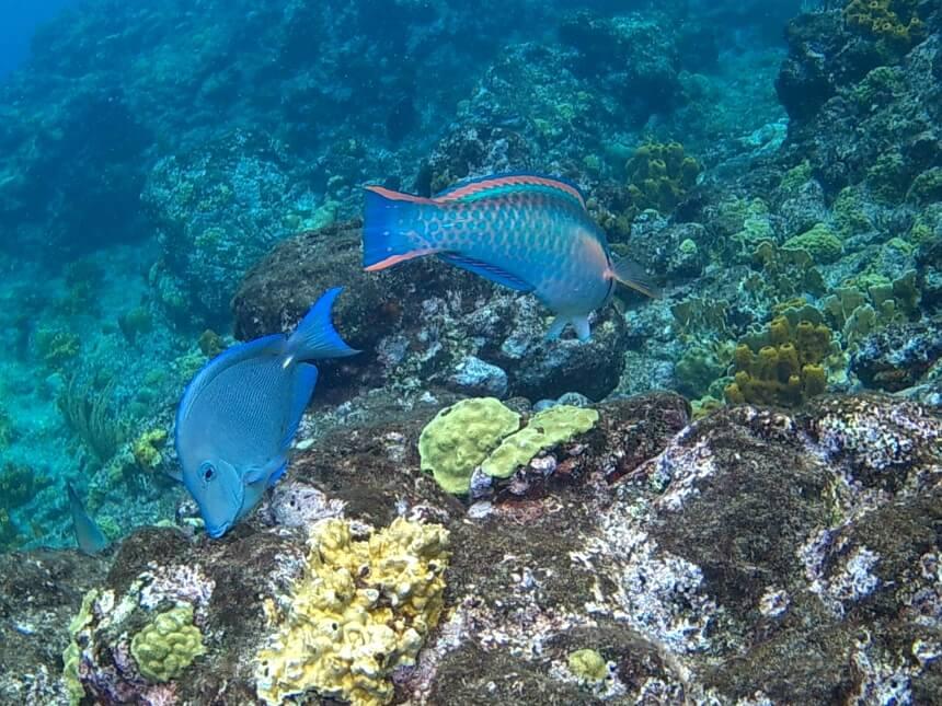 Zeker doen op Guadeloupe: ga snorkelen bij Reserve Cousteau