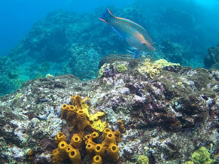 Ga snorkelen in het Réserve Cousteau