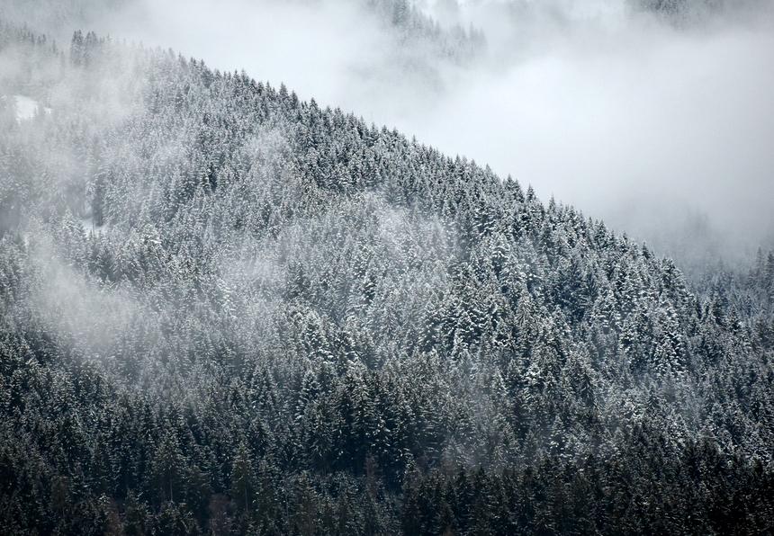 Wildschönau besneeuwde bossen