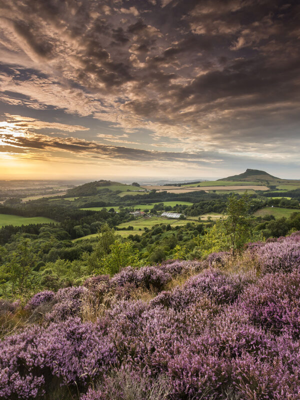 Sunset and Heather Roseberry Topping from Gribdale, North York Moors National Park, Mike Kipling