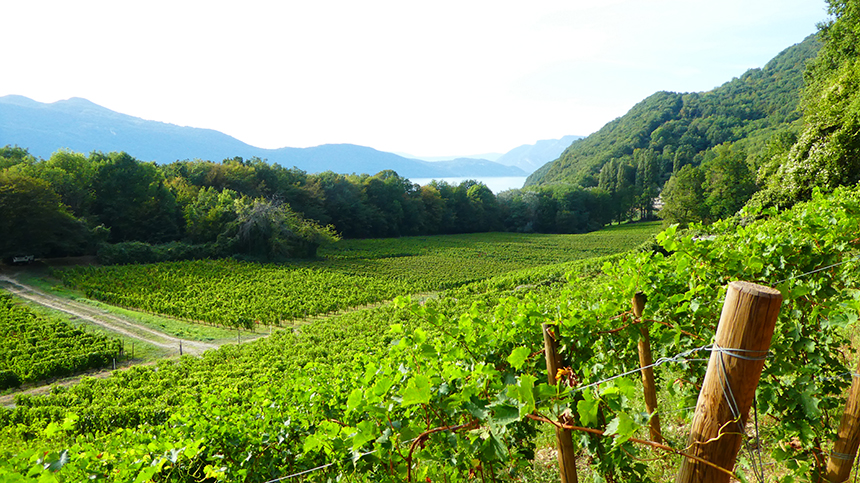 Wijngaarden, Domaine Xavier Jacqueline, Aix Les Bains