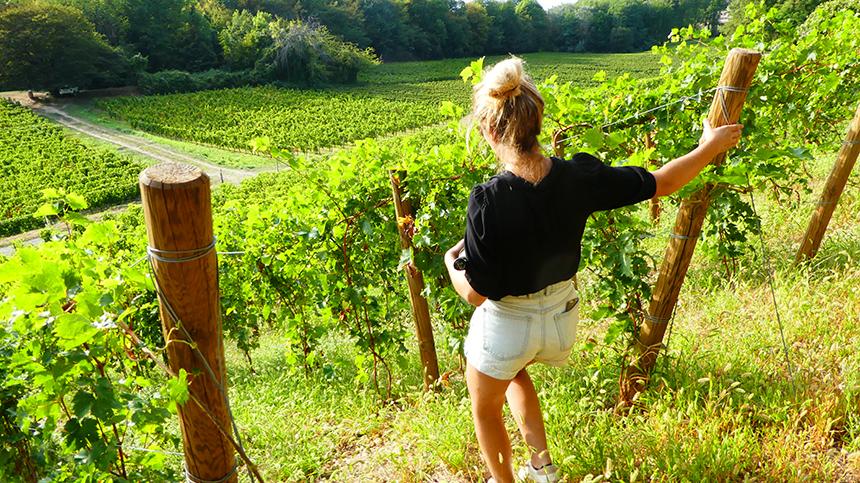 Wijngaarden Domaine Xavier Jacqueline Auvergne-Rhône-Alpes