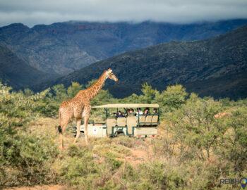 Safari proeven in Zuid-Afrika
