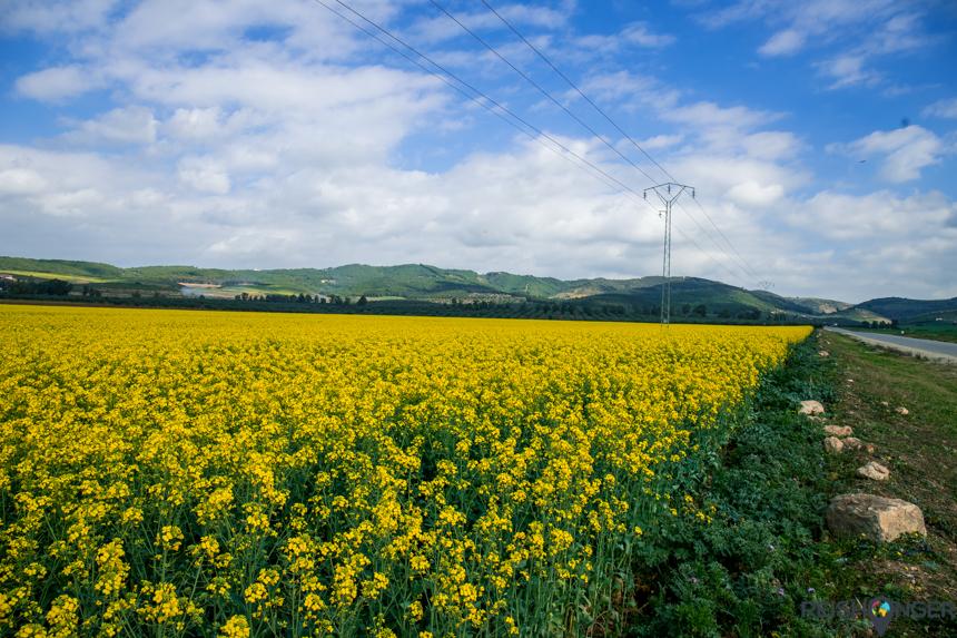 Gele bloemenvelden Tunesië