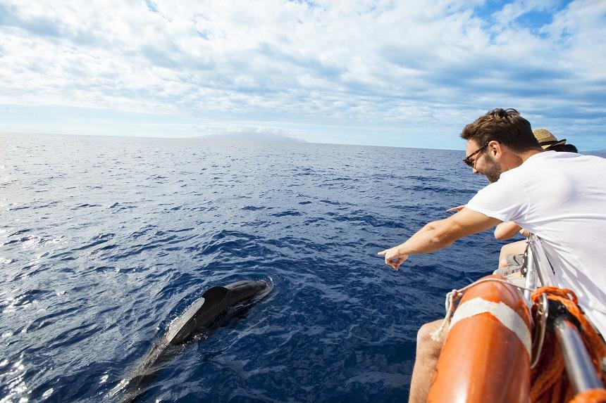 Tenerife #wijkomenterug - dolfijnen en walvissen spotten op Tenerife