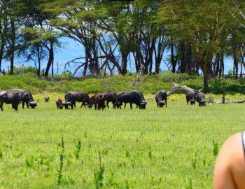 Naivasha: een safariwalhalla voor de sportieveling!