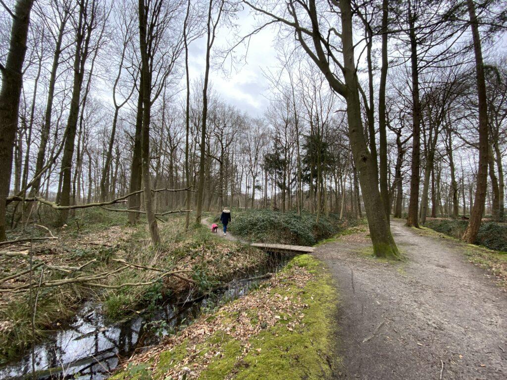 Hoevelakense Bos in Nijkerk