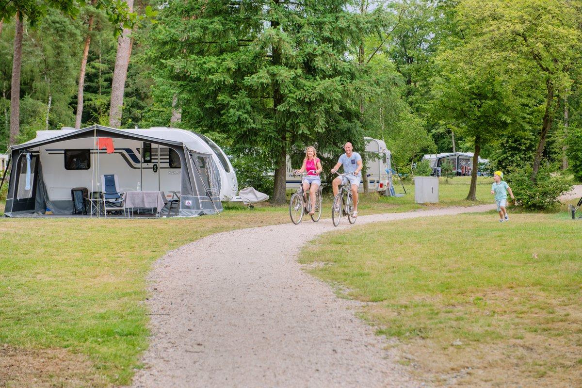 Zomervakantie in Nederland Grote-Bos