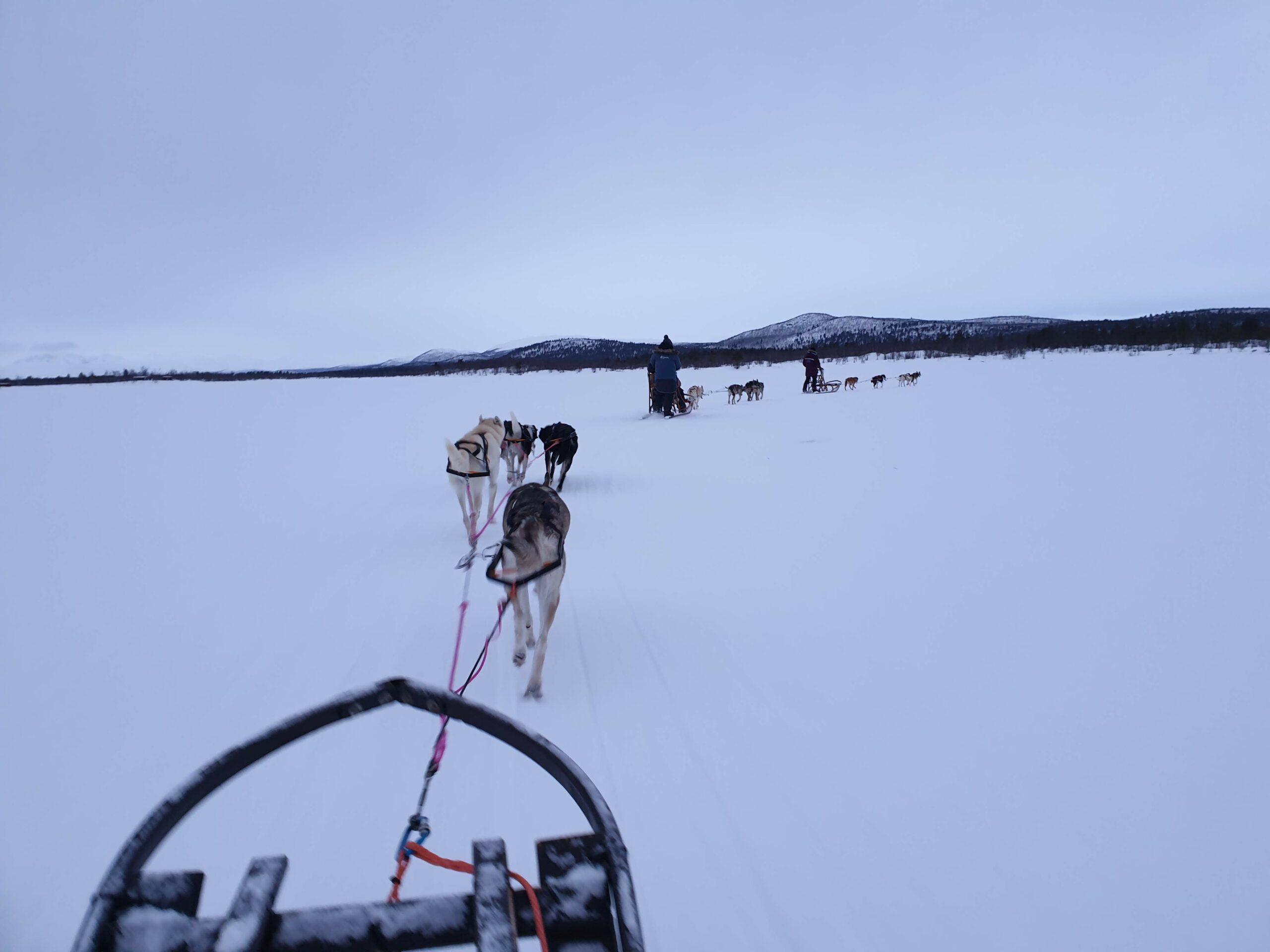 Husky Home Zweeds Lapland