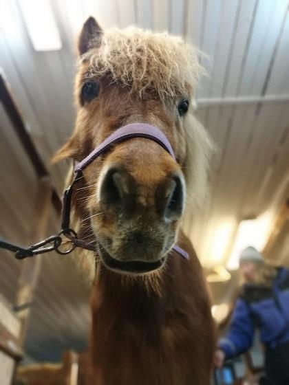 Ofelas Icelandic Horses Kiruna
