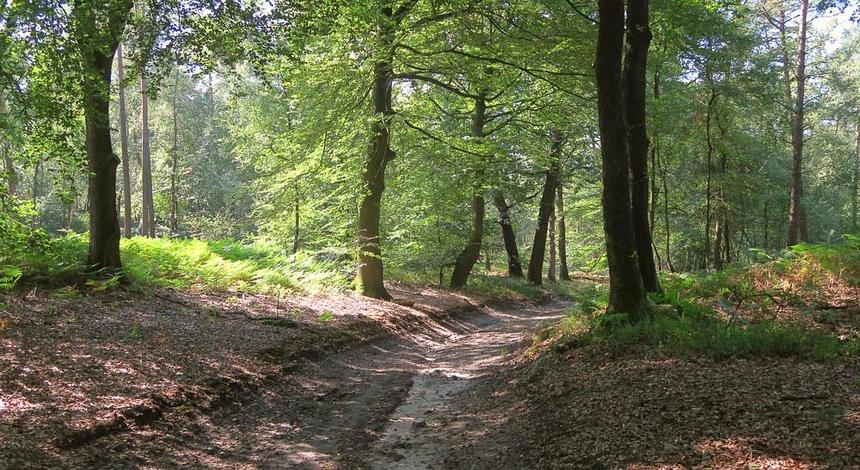 De Sallandse Heuvelrug bij Hellendoorn.
