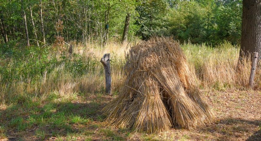Graan wordt in Twente nog volop verbouwd.
