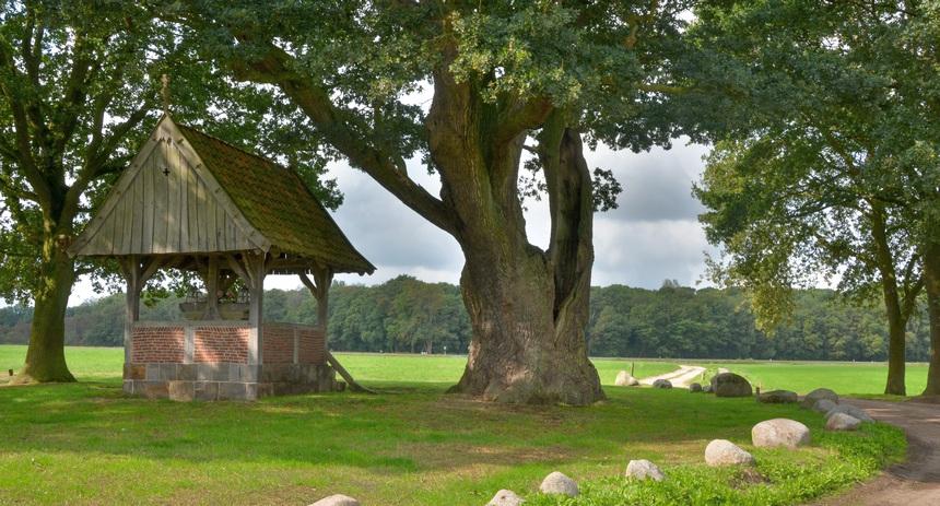 Bij de eeuwenoude kroeseboom werd al in de middeleeuwen rechtgesproken.